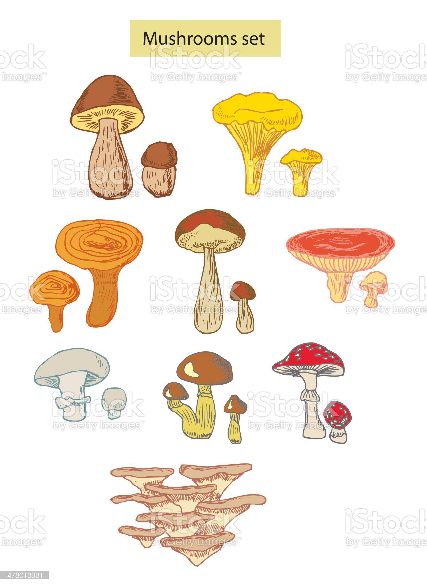 mushrooms set detailed illustration royalty-free stock vector art