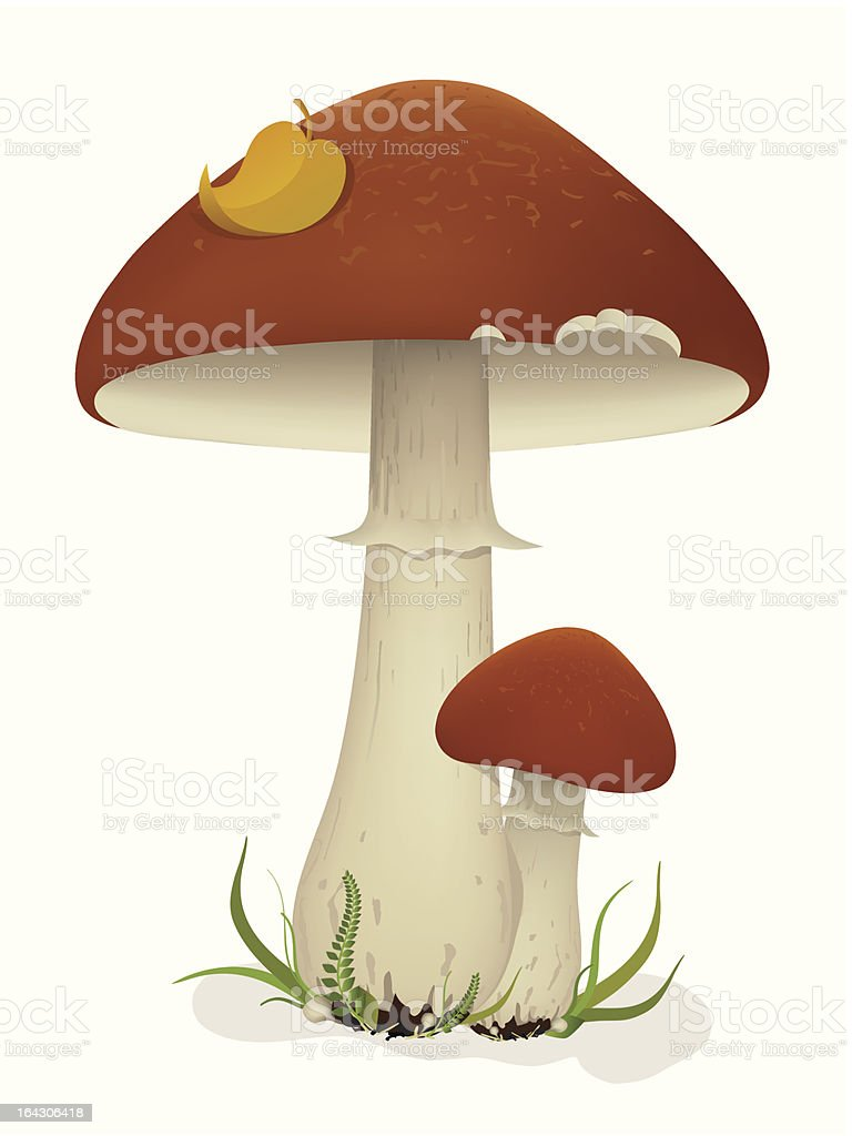 Mushrooms with leaf and grass royalty-free stock vector art