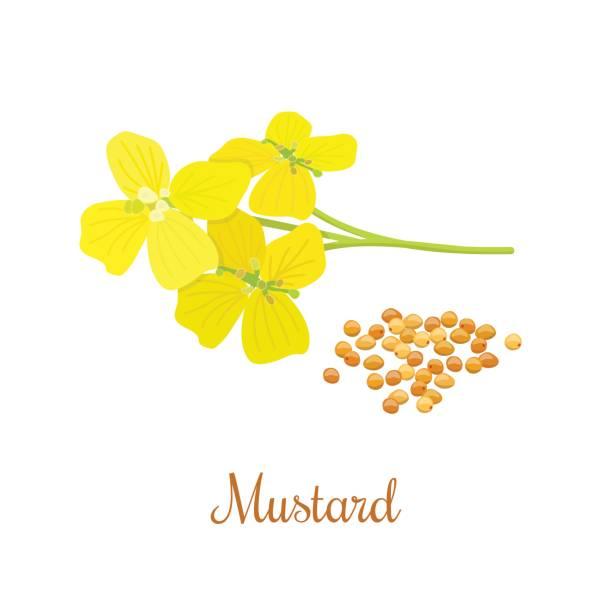 Mustard Flower Clip Art, Vector Images & Illustrations ...
