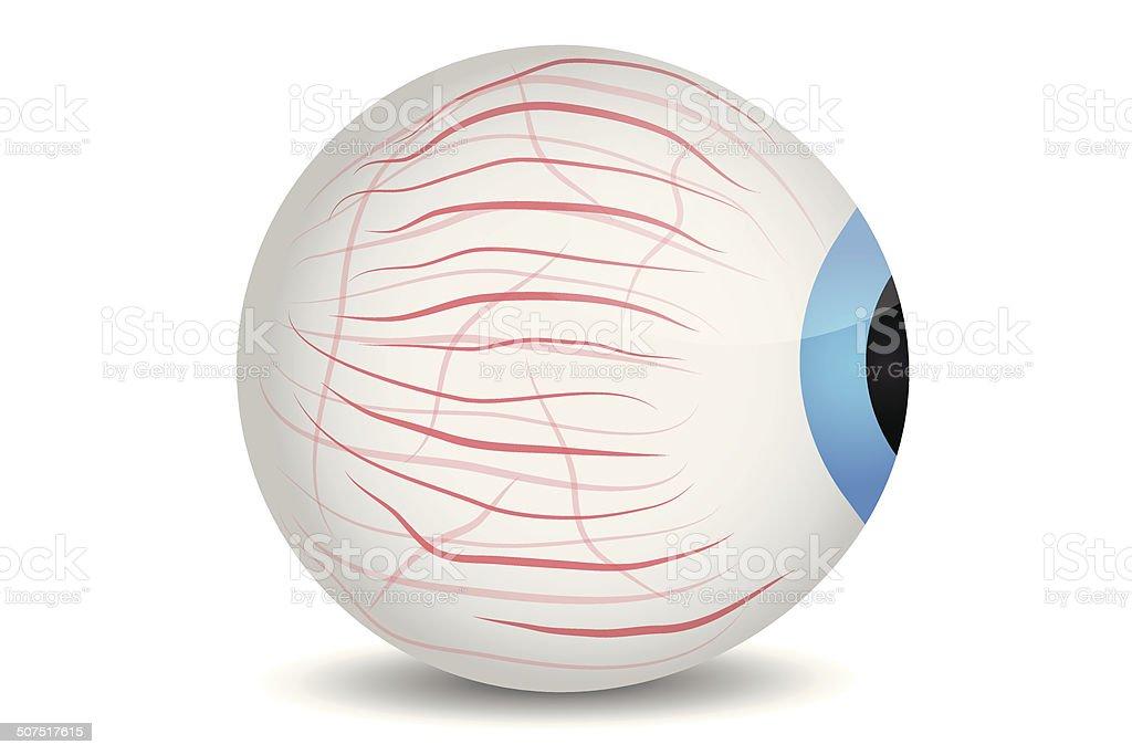 Naked eye with veins vector art illustration