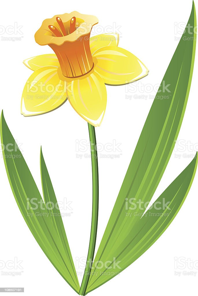 Narcissus flower royalty-free stock vector art