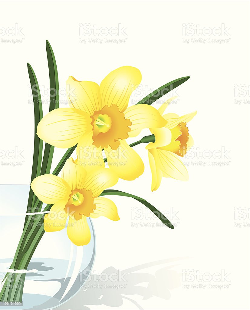 Narcissus royalty-free stock vector art