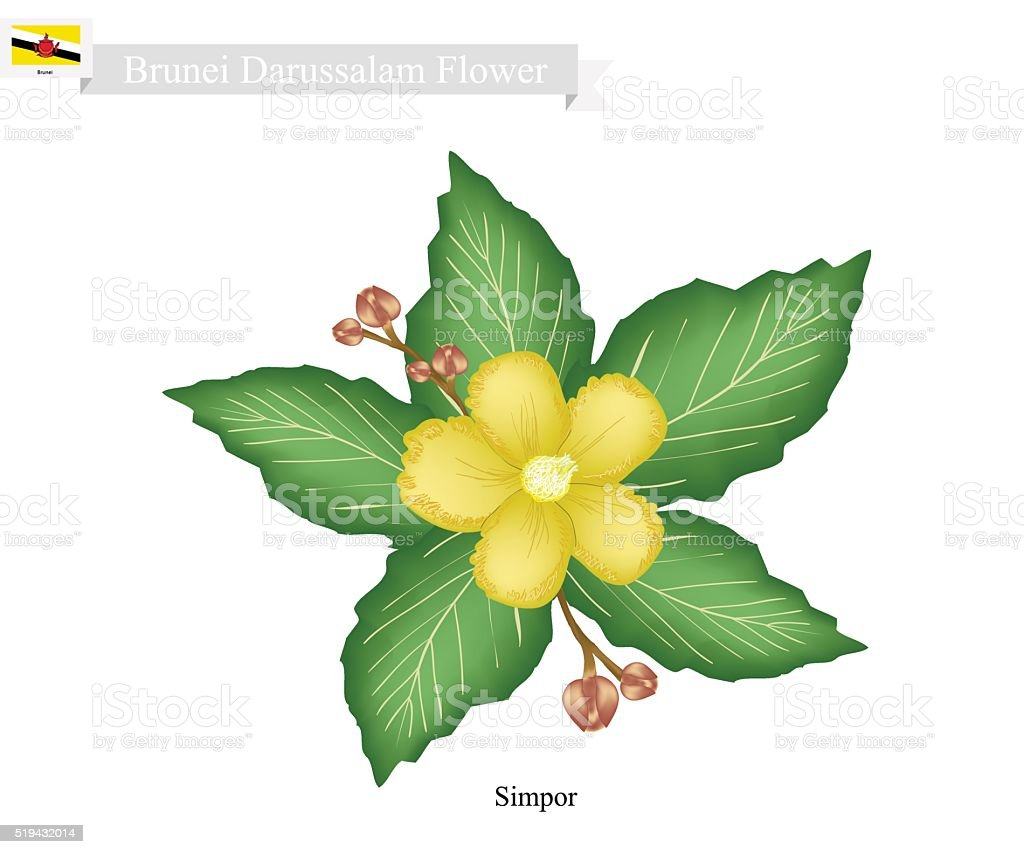 National Flower of Brunei Darussalam, Simpor Flowers vector art illustration