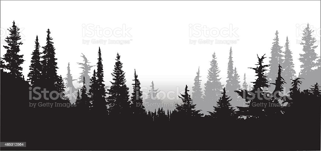 National Forest Pines vector art illustration