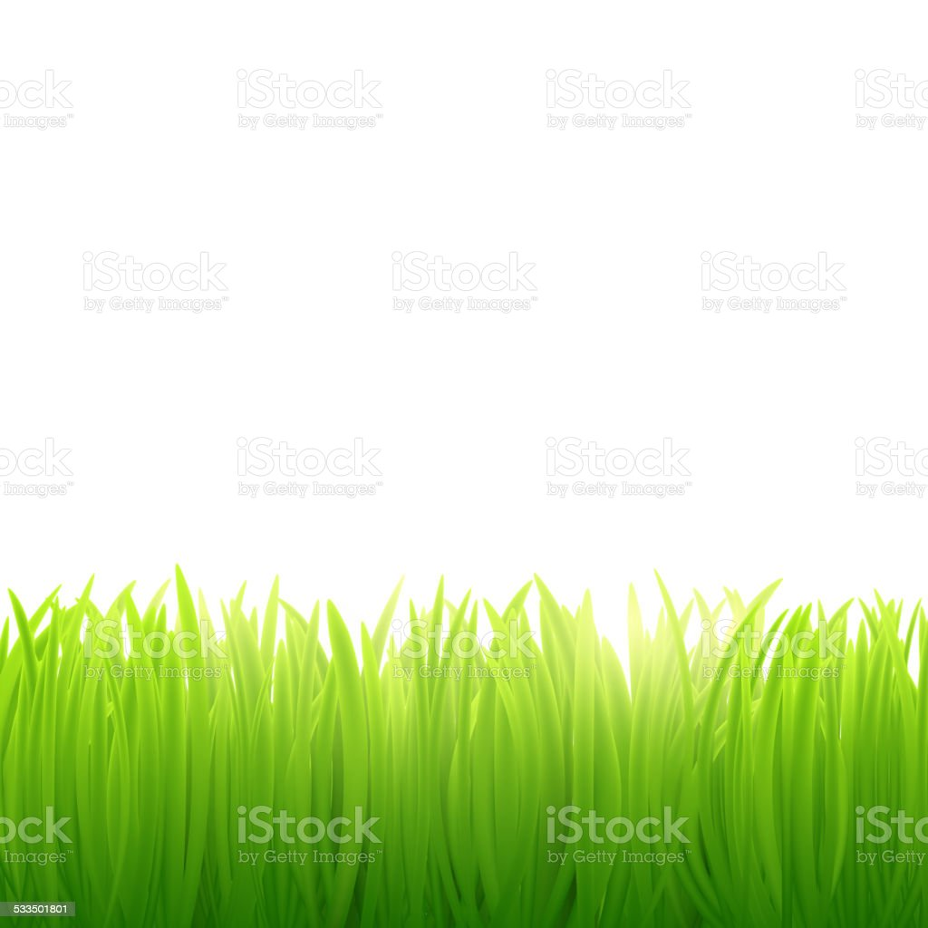natural background of grass on white background vector art illustration