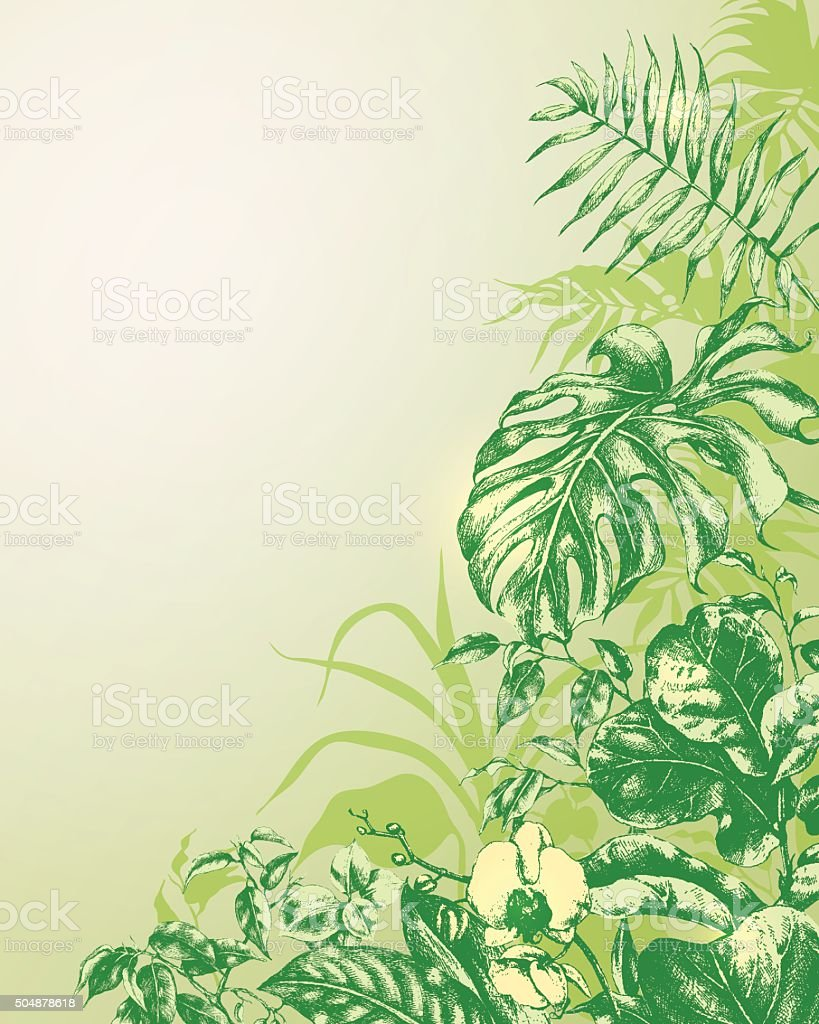 Natural  Background with  tropical plants. vector art illustration