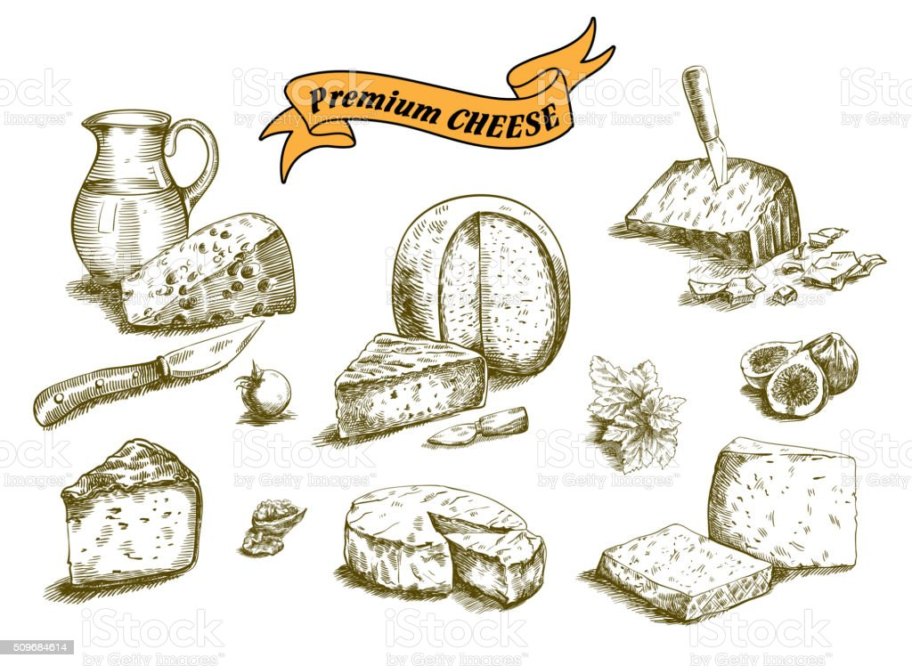 natural cheese sketches vector art illustration