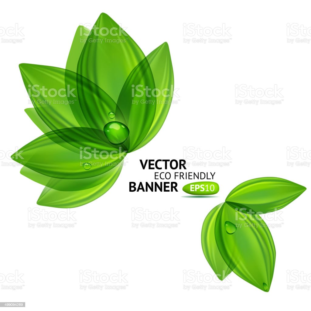 Natural leaves with drops vector art illustration