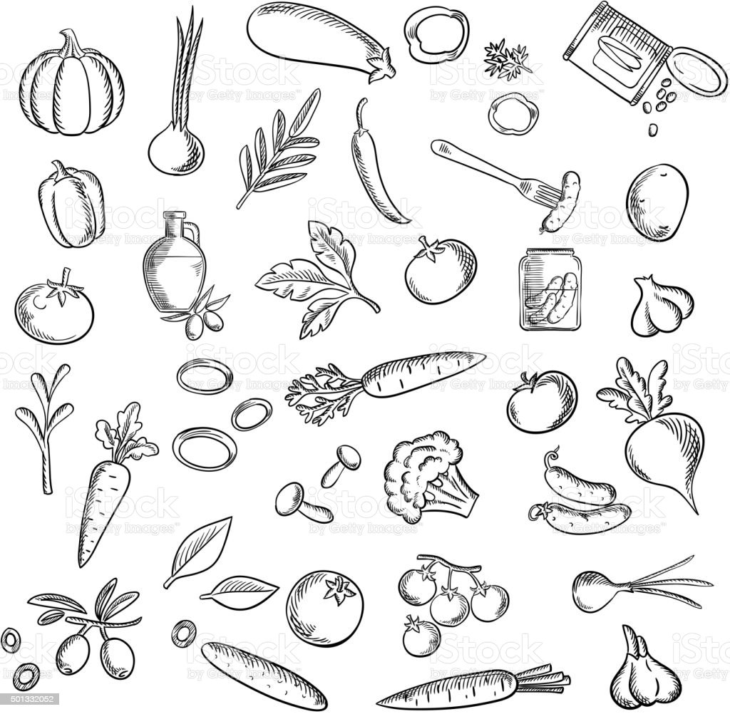 Natural ripe vegetables and herbs sketch icons vector art illustration