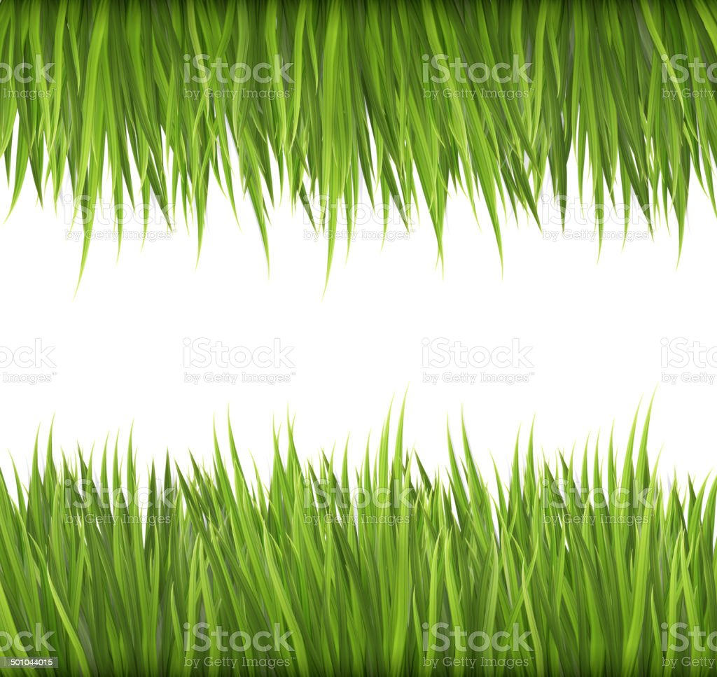 Nature background with green grass. Vector. vector art illustration