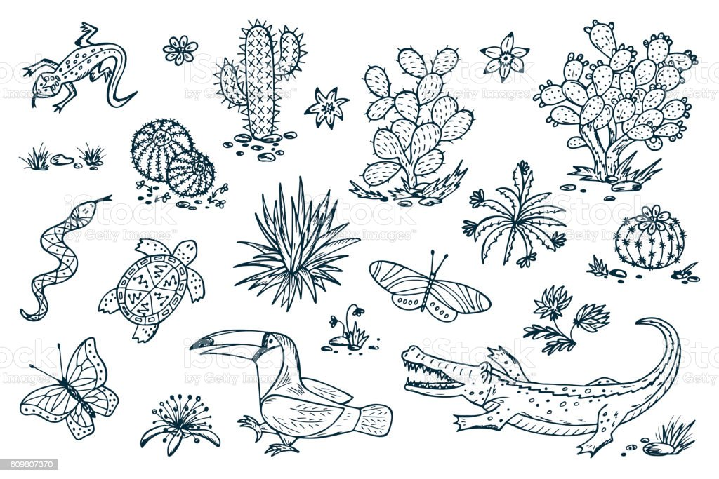 Nature of Mexico. Plants and animals. Mexican flora and fauna. vector art illustration