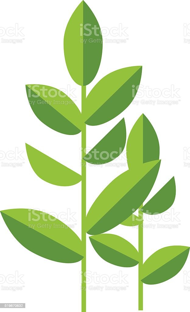 Nature tea plant green vector leaves isolated on white vector art illustration