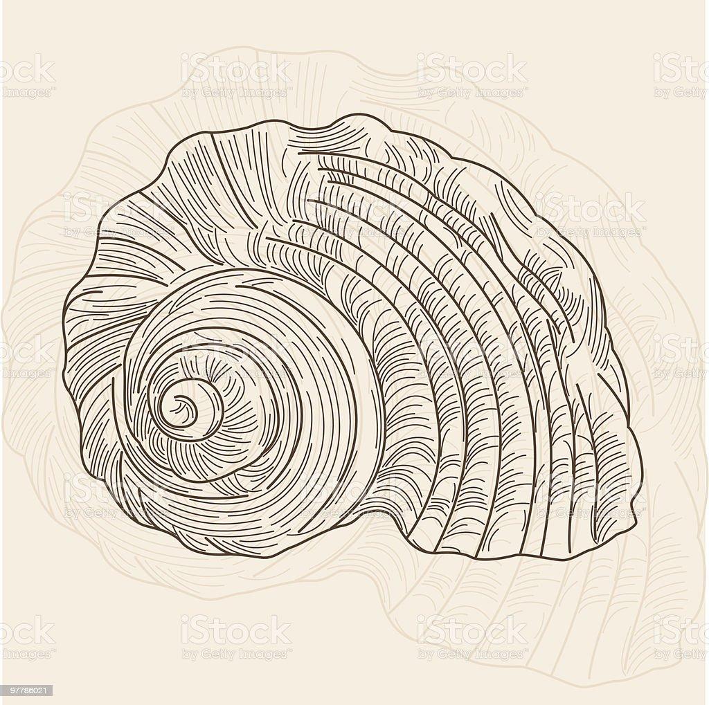 Nautilus Shell royalty-free stock vector art
