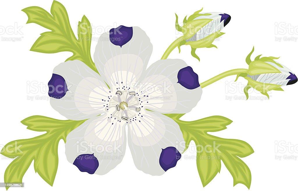 Nemophila vector art illustration