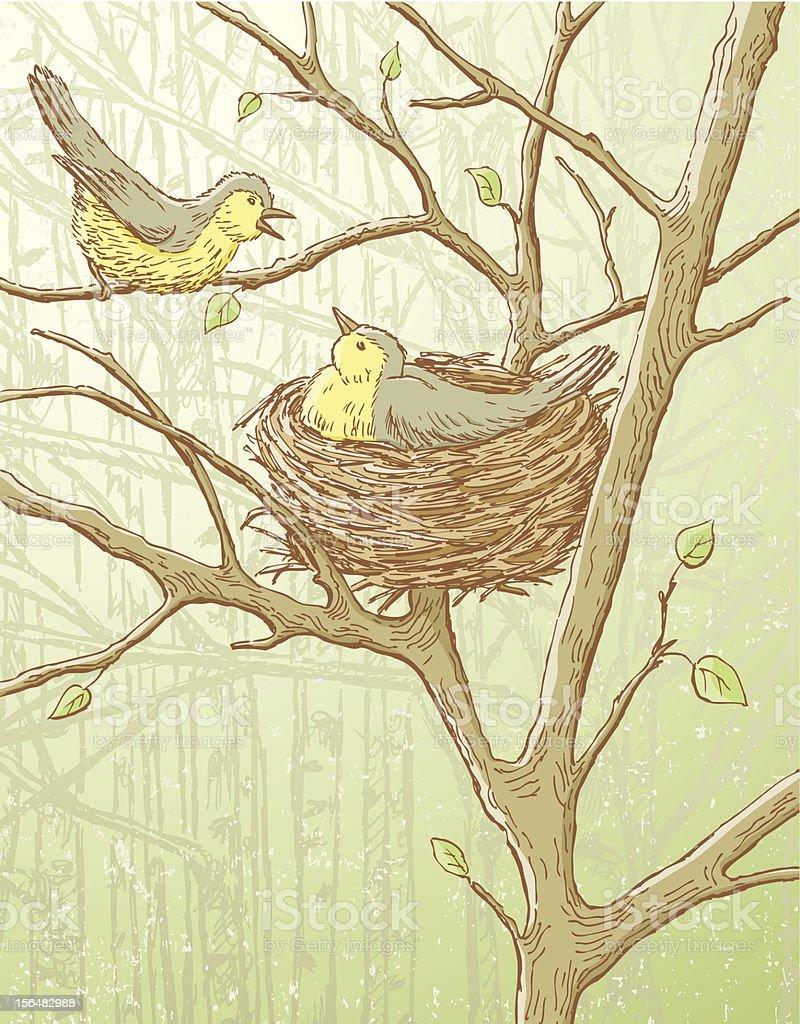 nesting birds vector art illustration