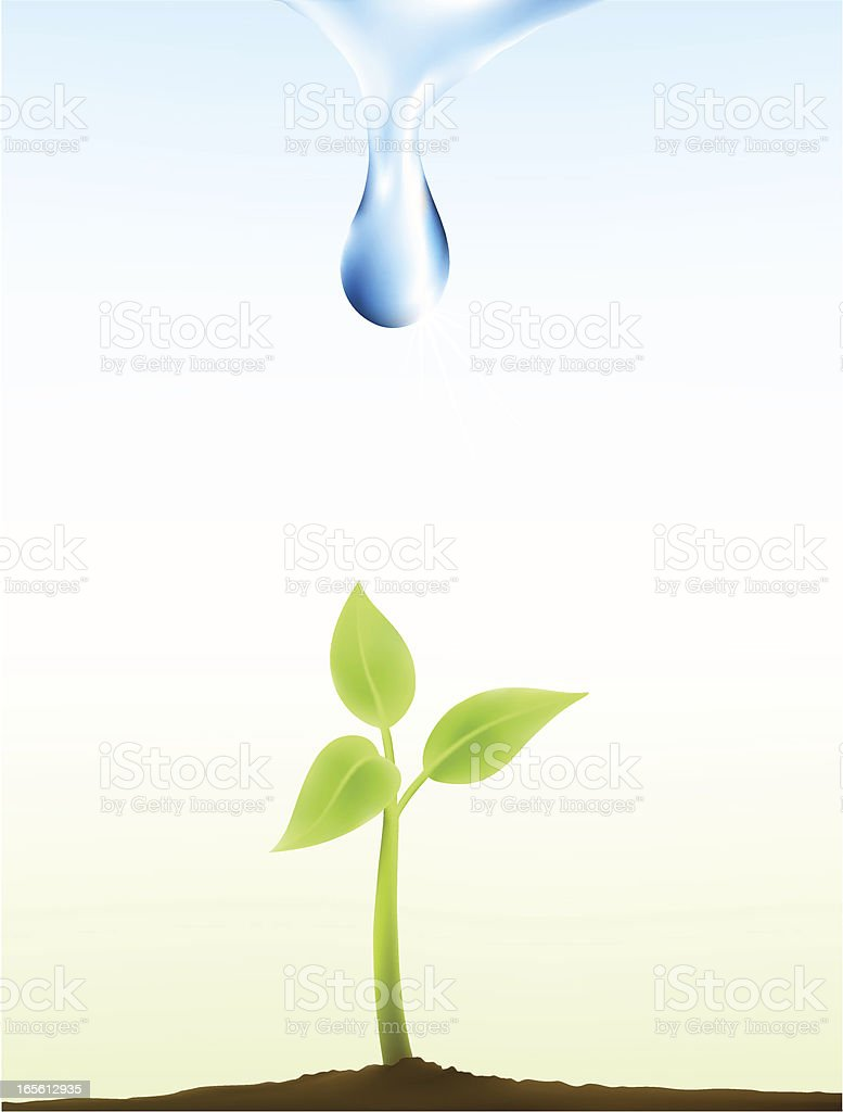 New plant royalty-free stock vector art