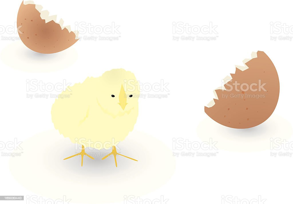 Newly Hatched Chick royalty-free stock vector art