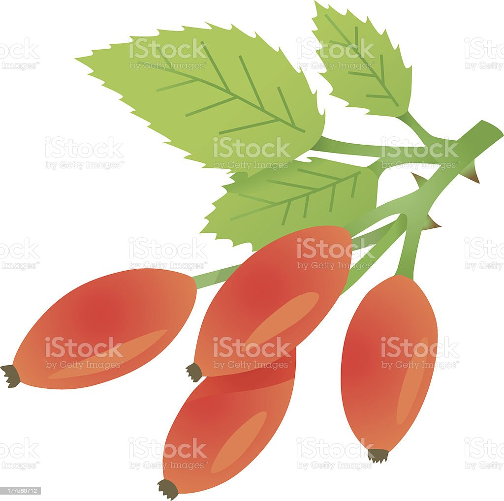 nice rose hips royalty-free stock vector art