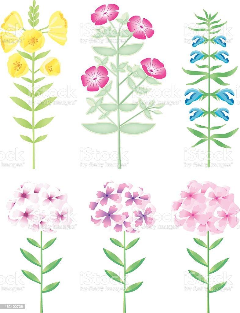nice Wild- and Gardenflowers vector art illustration