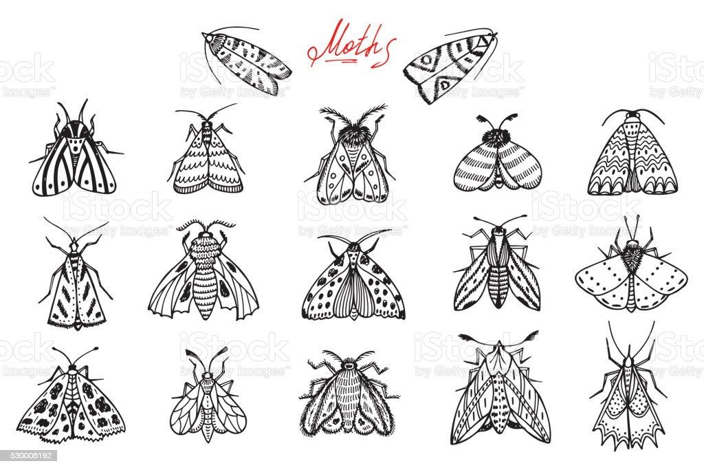 Night moths. Hand drawn doodle moth vector set vector art illustration
