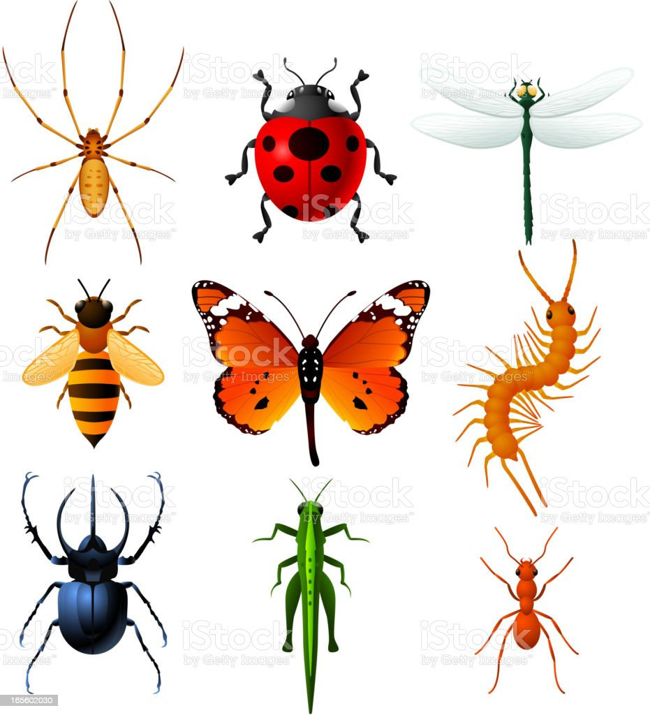 Nine Insects icons set vector illustration collection royalty-free stock vector art