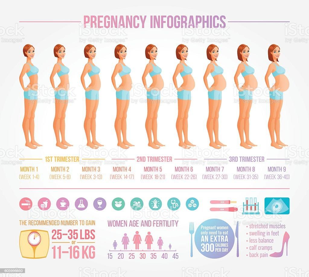Nine months of pregnancy in progress. Infographic vector set. vector art illustration
