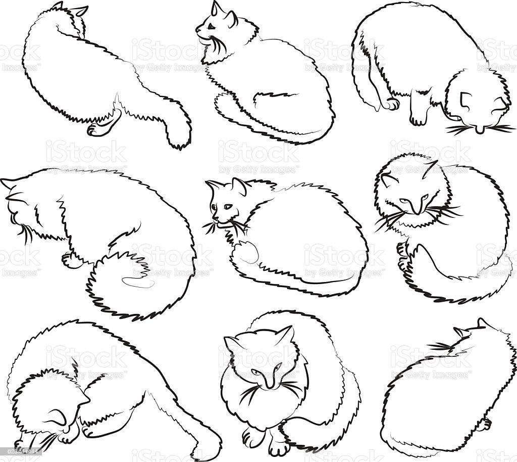 Nine sketches of cat vector art illustration