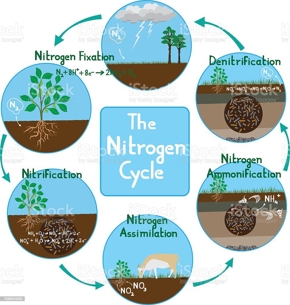 Nitrogen Cycle in nature vector art illustration