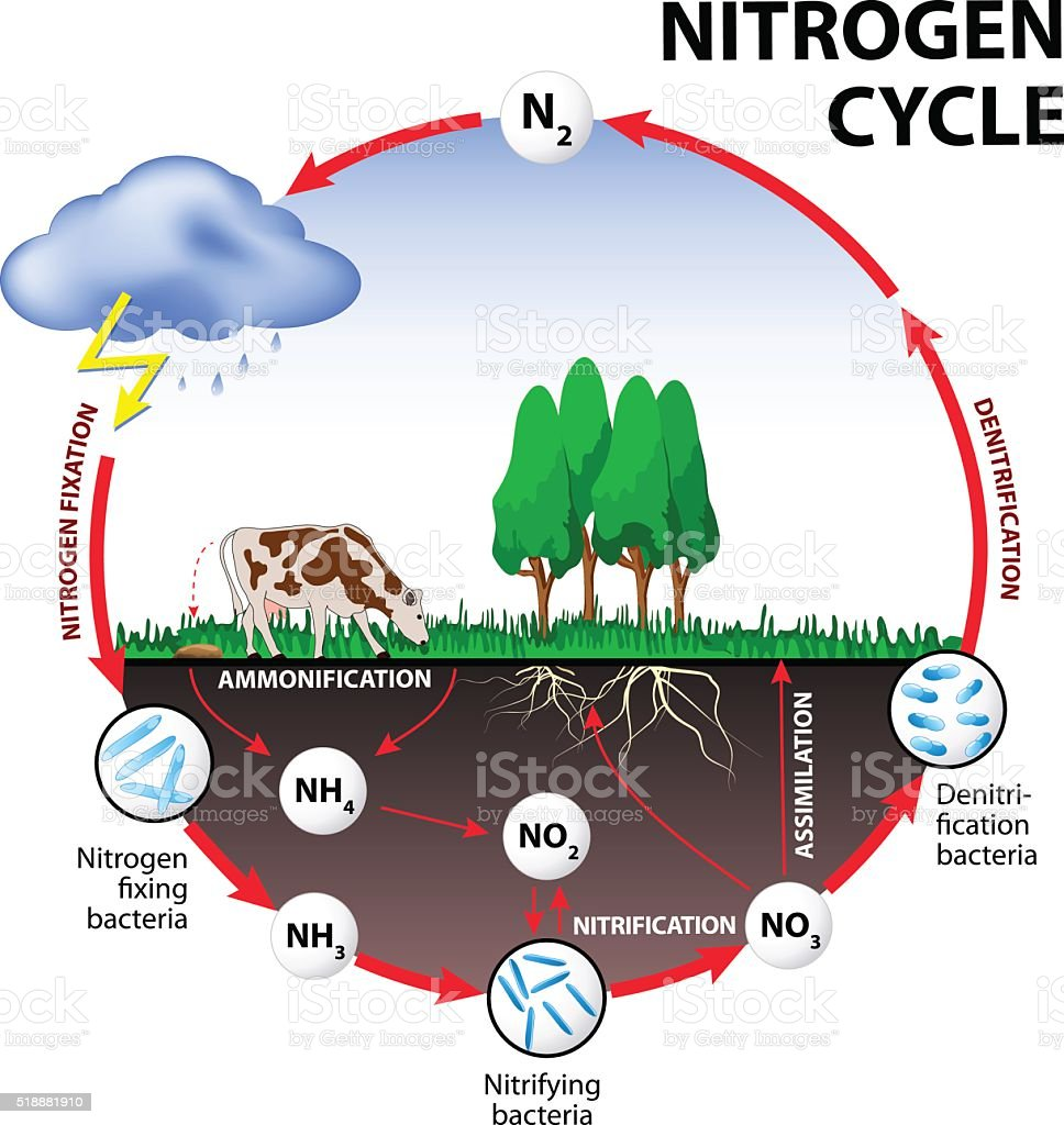 Nitrogen cycle vector art illustration