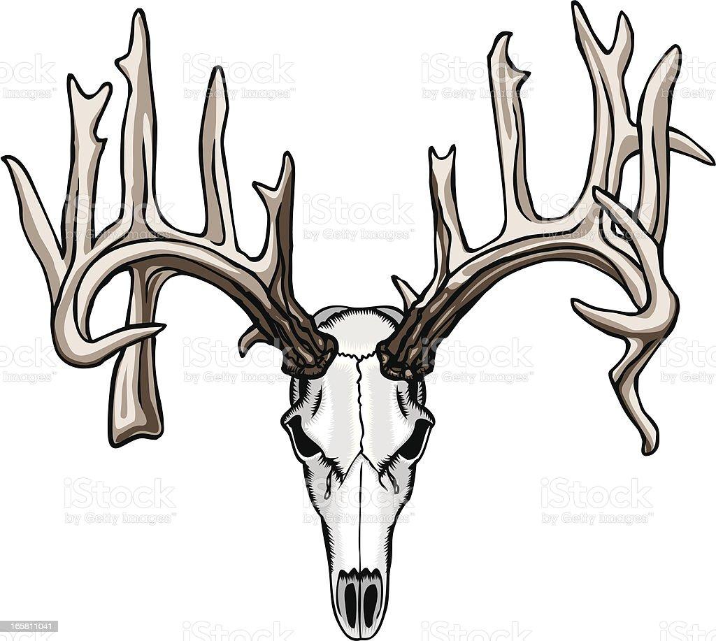 Non-typical antler skull vector art illustration