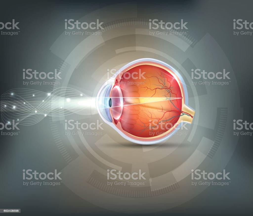 Normal eye vector art illustration