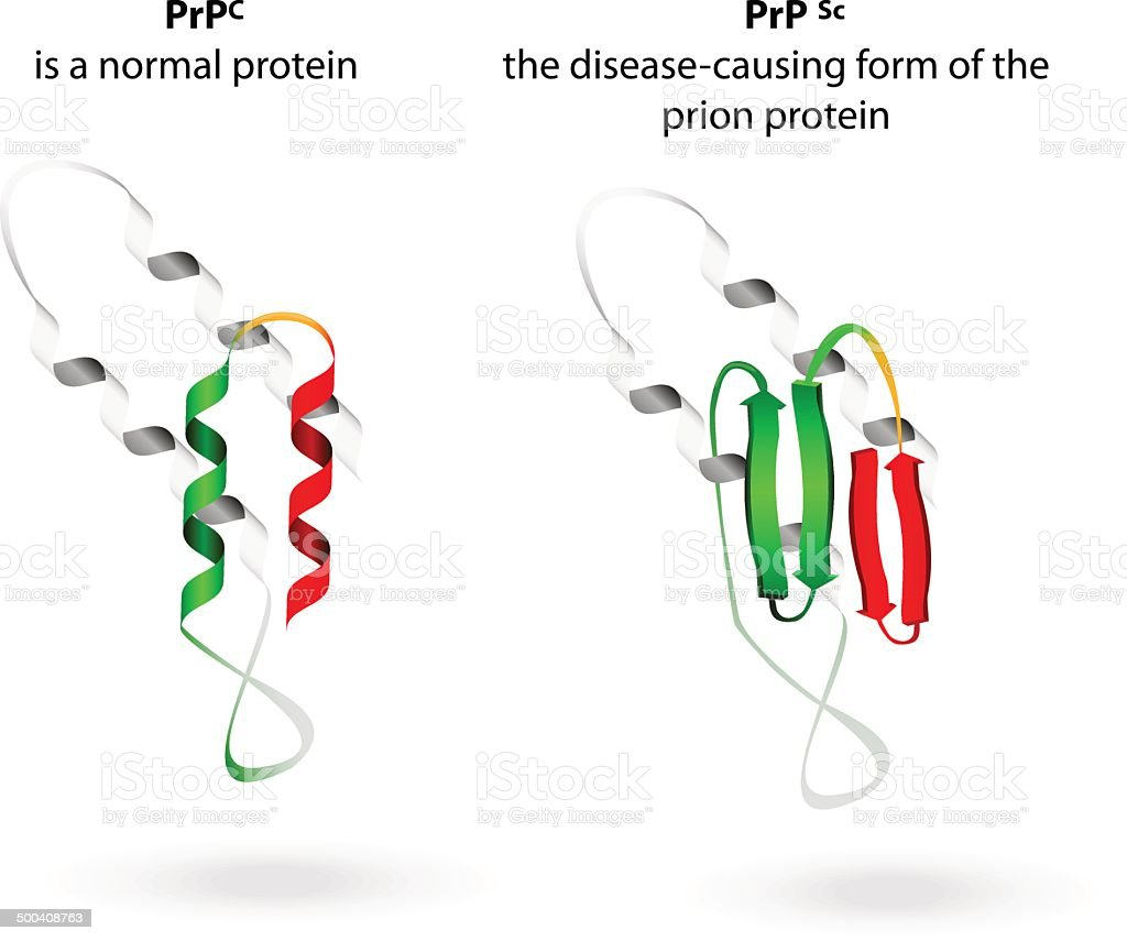 Normal protein and prion diseases. Vector scheme vector art illustration