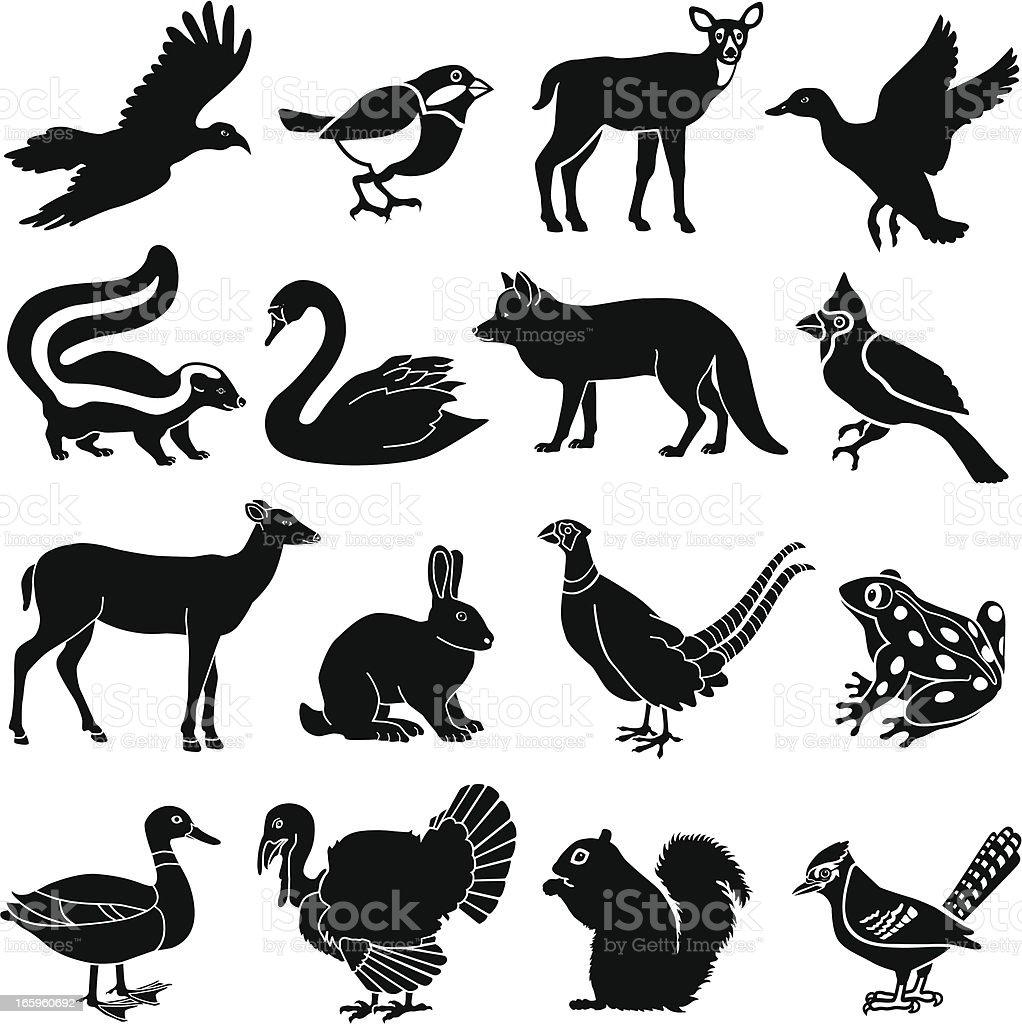 North American animals vector art illustration