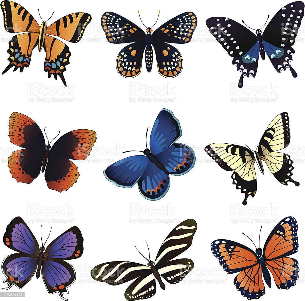 North American butterflies vector art illustration