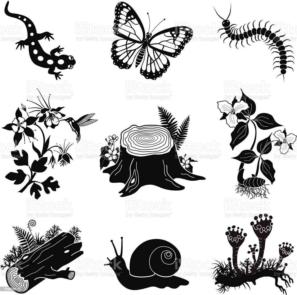 North American forest icon set in black and white vector art illustration