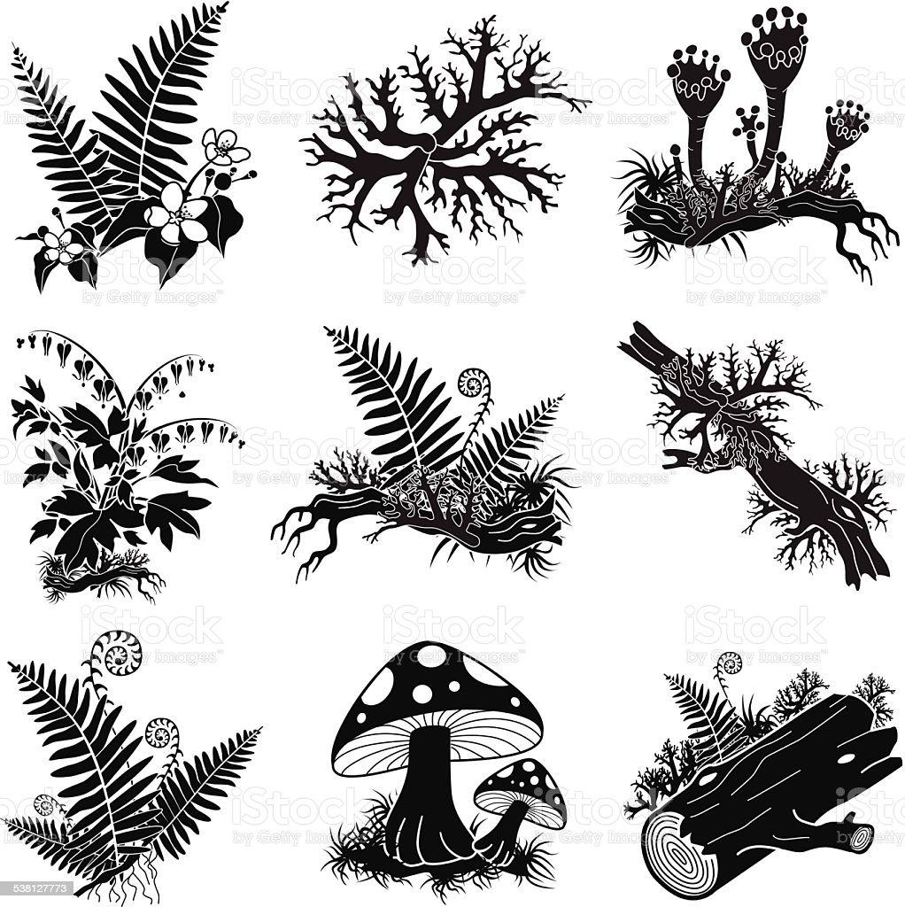 North American forest lichens and plants illustration set vector art illustration