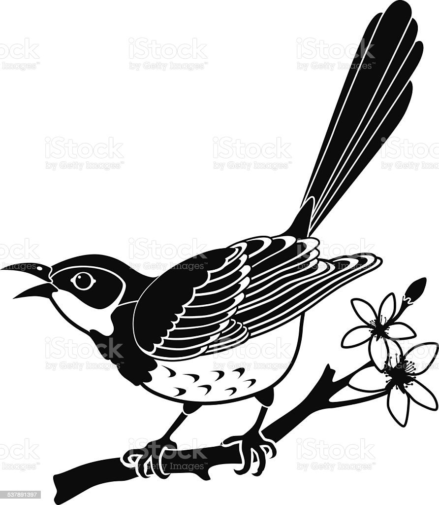 Northern mockingbird perched on an orange tree branch vector art illustration