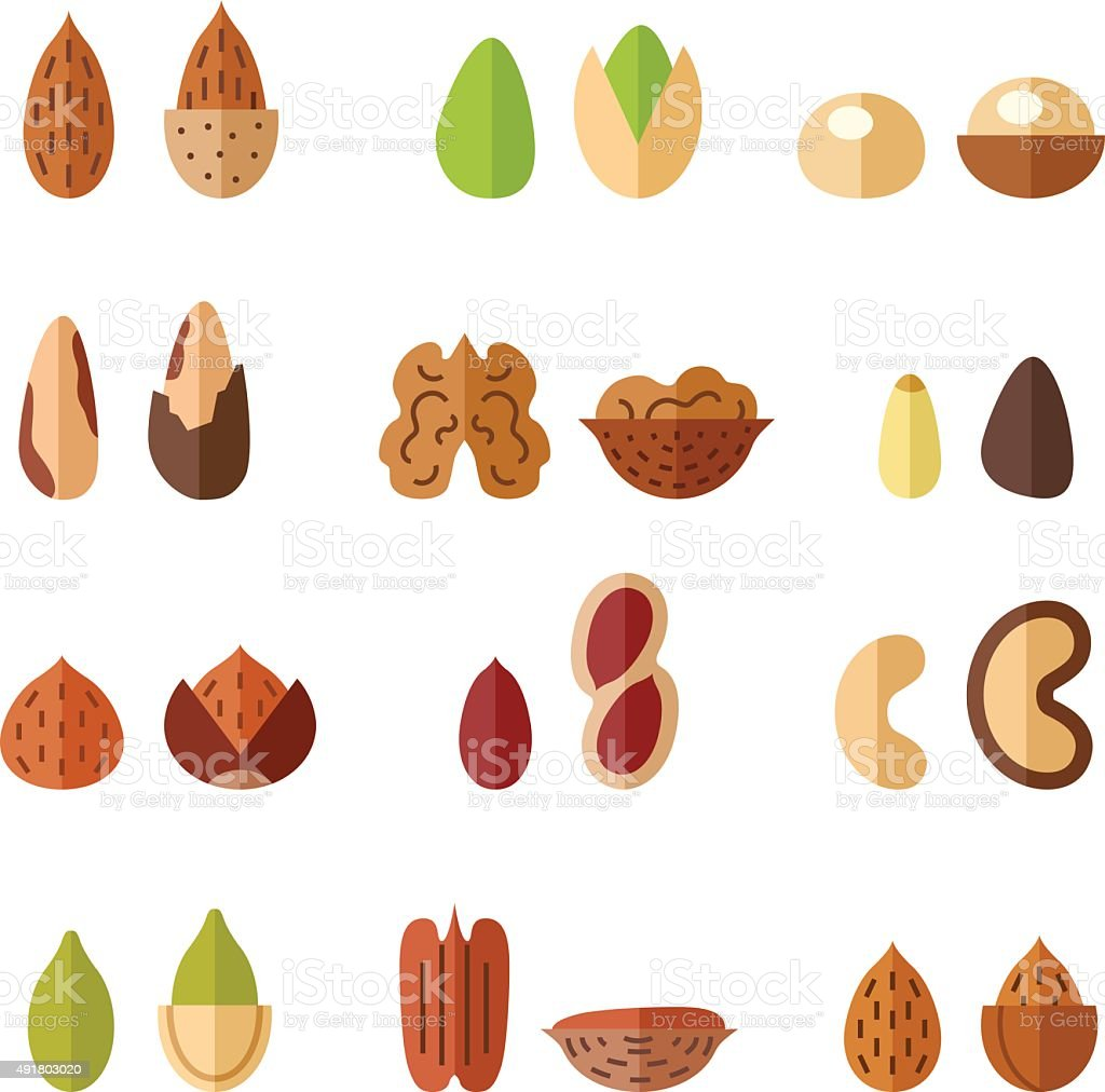 Nuts and seeds vector set. Modern flat design. vector art illustration