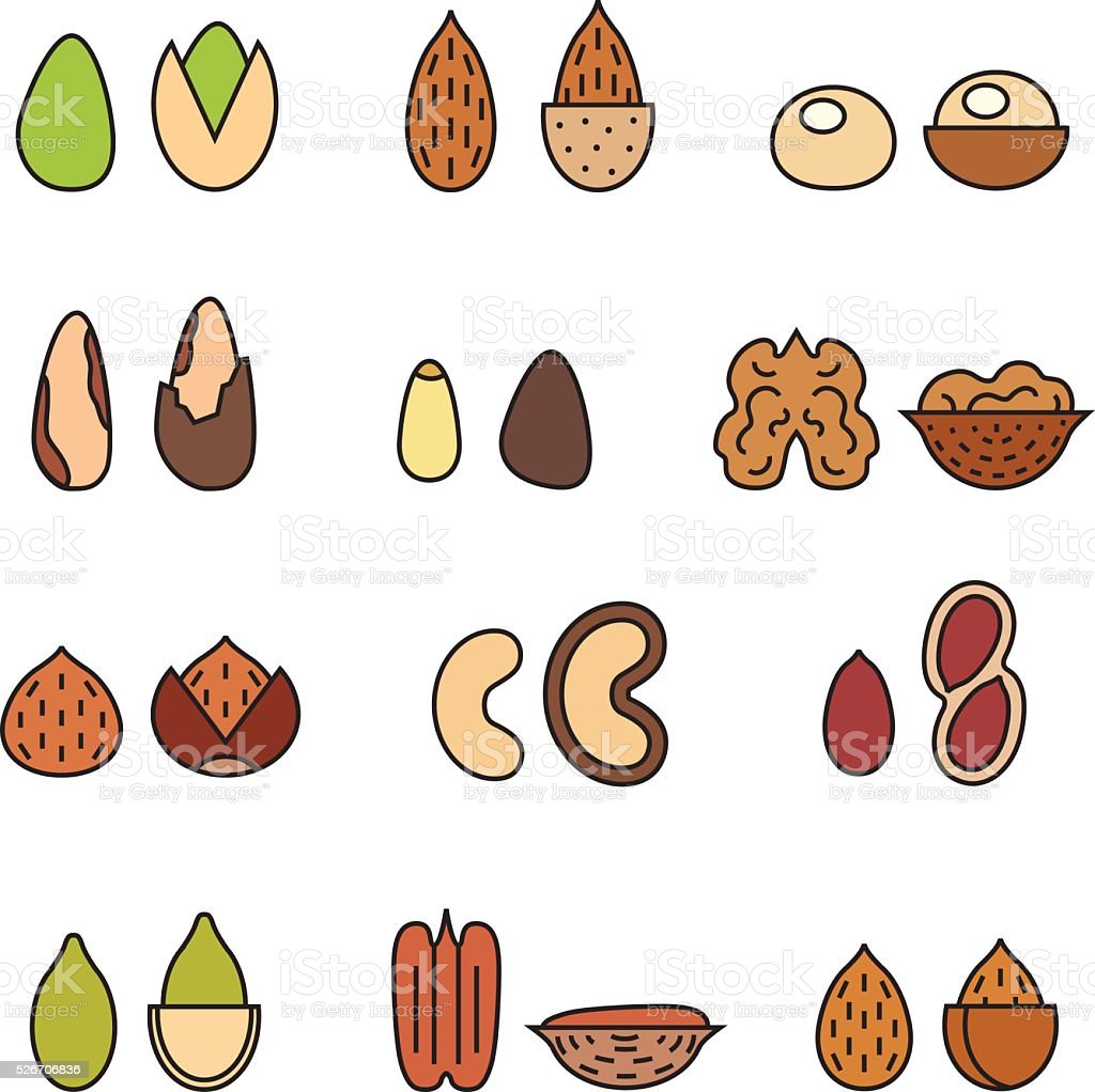 Nuts and seeds vector set. Modern outline multicolored minimalistic design. vector art illustration