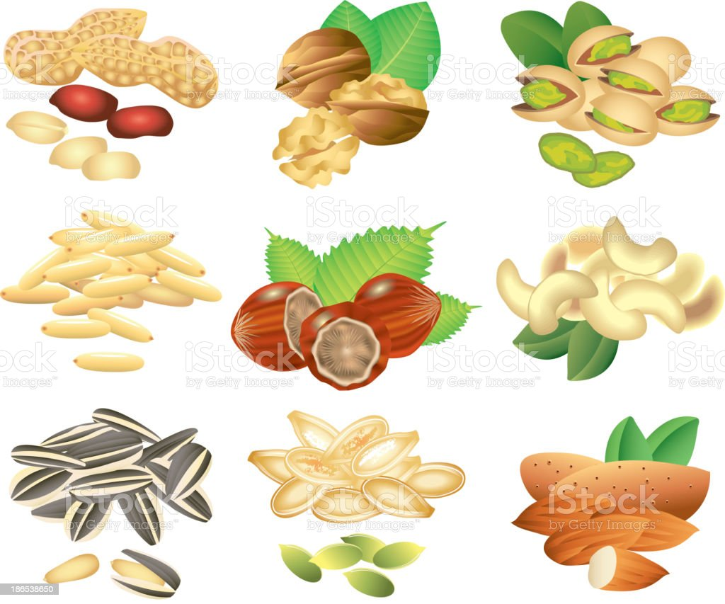 nuts and seeds vector set royalty-free stock vector art