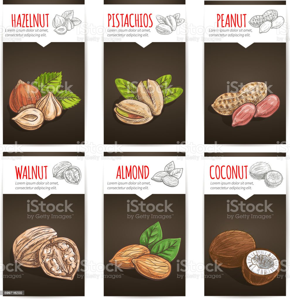Nuts, grain and kernels poster with titles vector art illustration