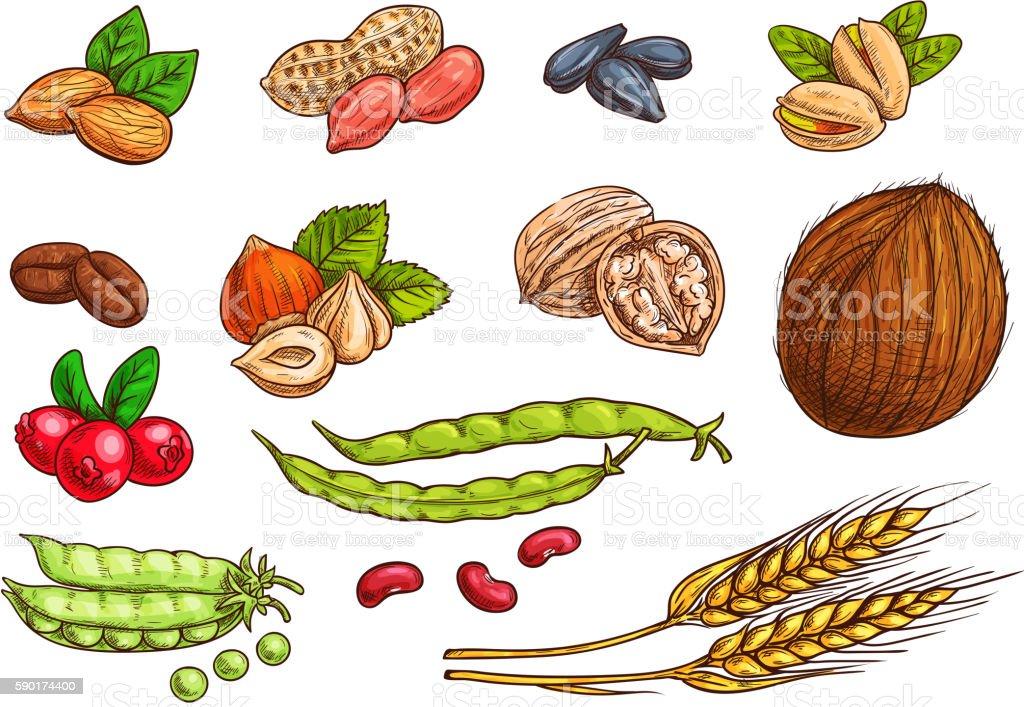 Nuts, grain, berries vector sketch elements vector art illustration