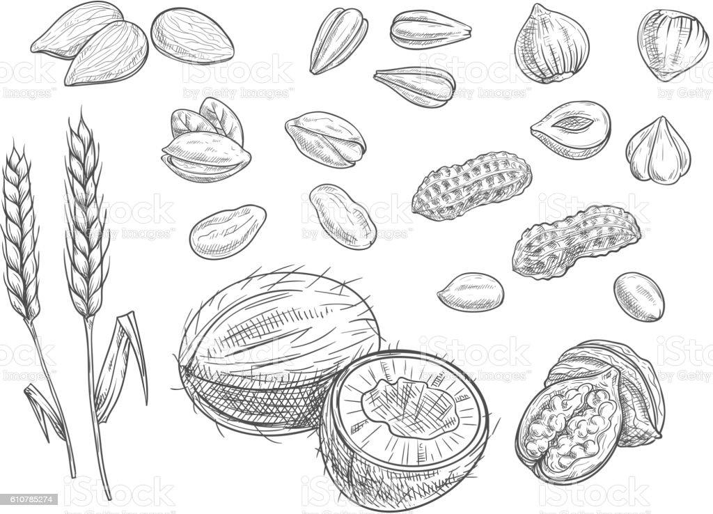 Nuts, grain pencil sketch icons vector art illustration
