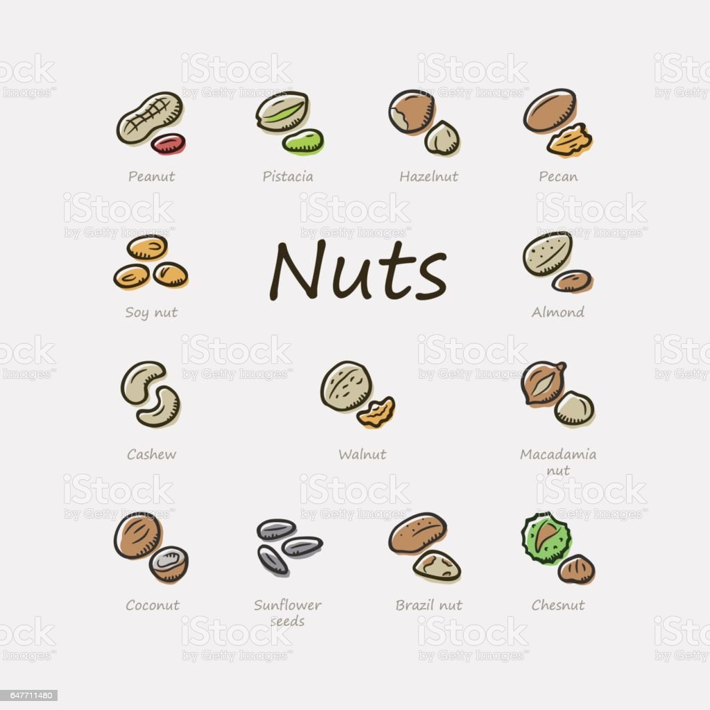 Nuts icons vector art illustration