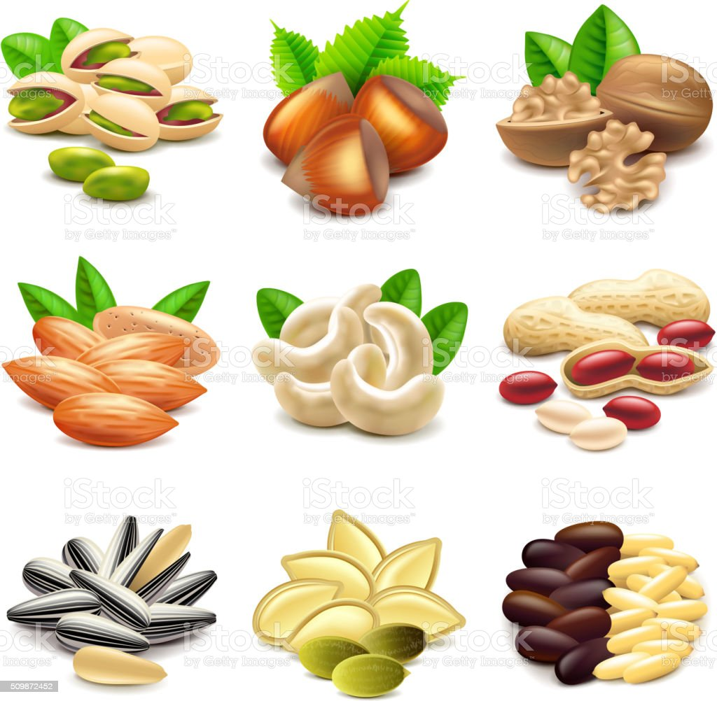 Nuts icons vector set vector art illustration