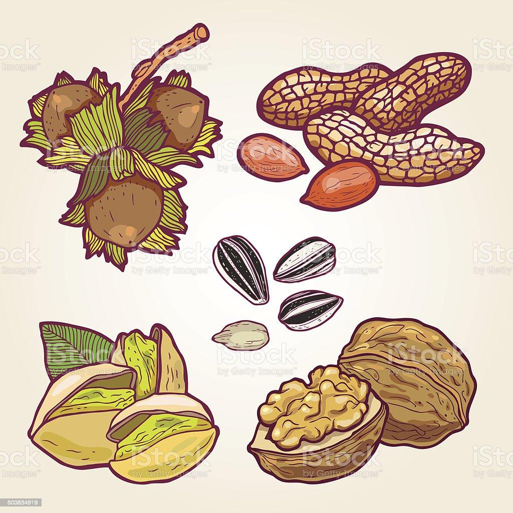 nuts- illustration vector art illustration