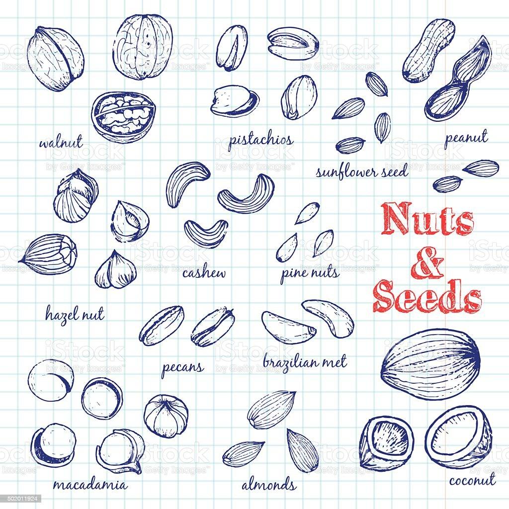 Nuts seamless pattern vector art illustration