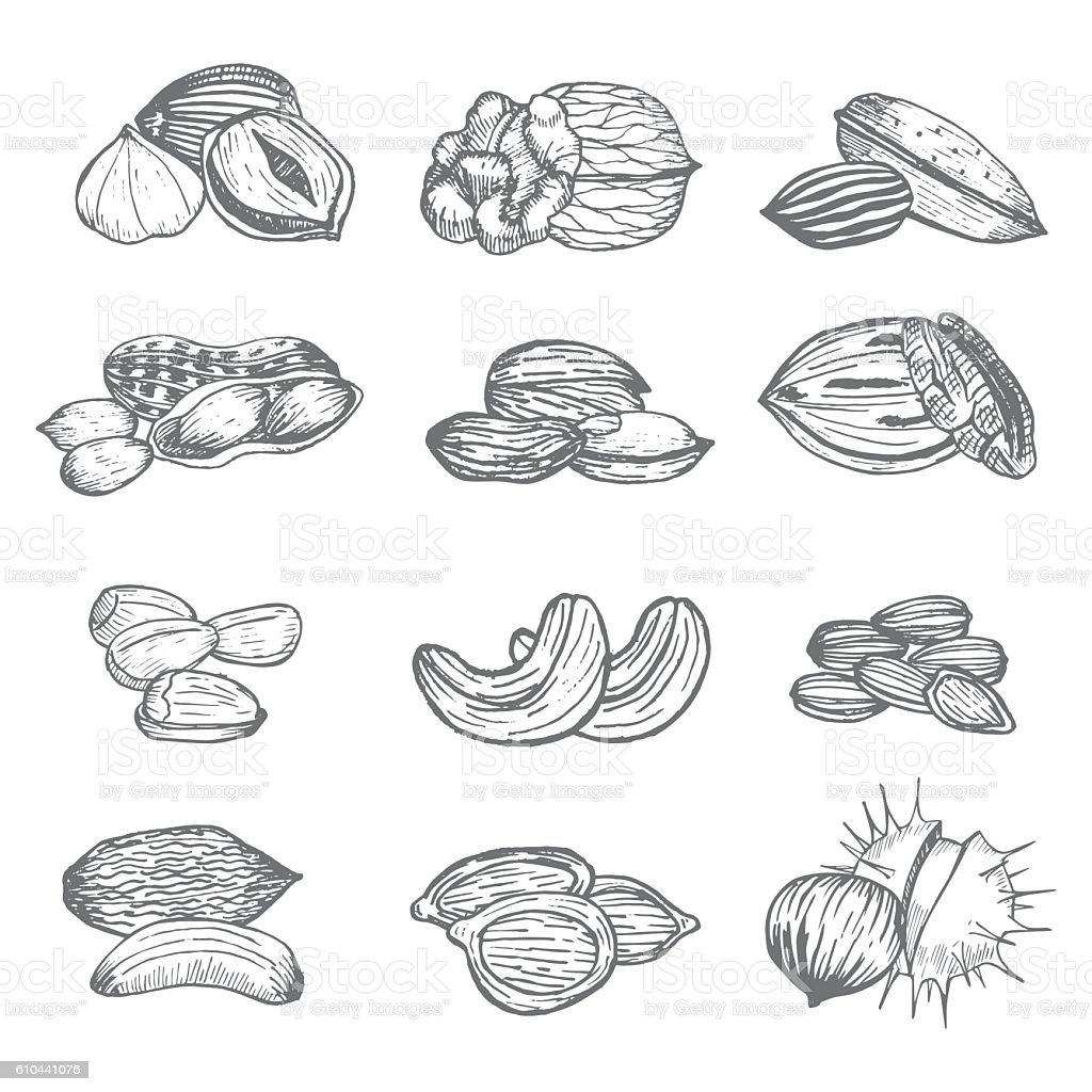 Nuts Set Hand Draw Sketch. Vector vector art illustration
