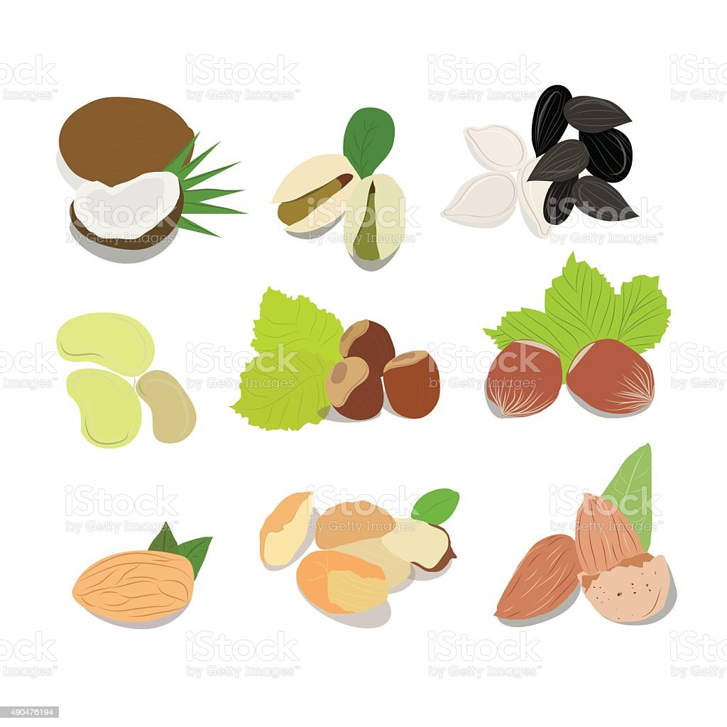 Nuts vector collection vector art illustration