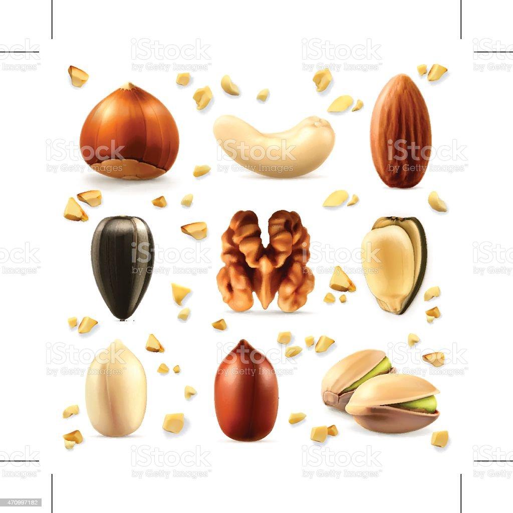 Nuts, vector icon set vector art illustration